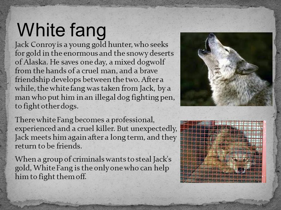 White fang Jack Conroy is a young gold hunter, who seeks for gold in the enormous and the snowy deserts of Alaska.
