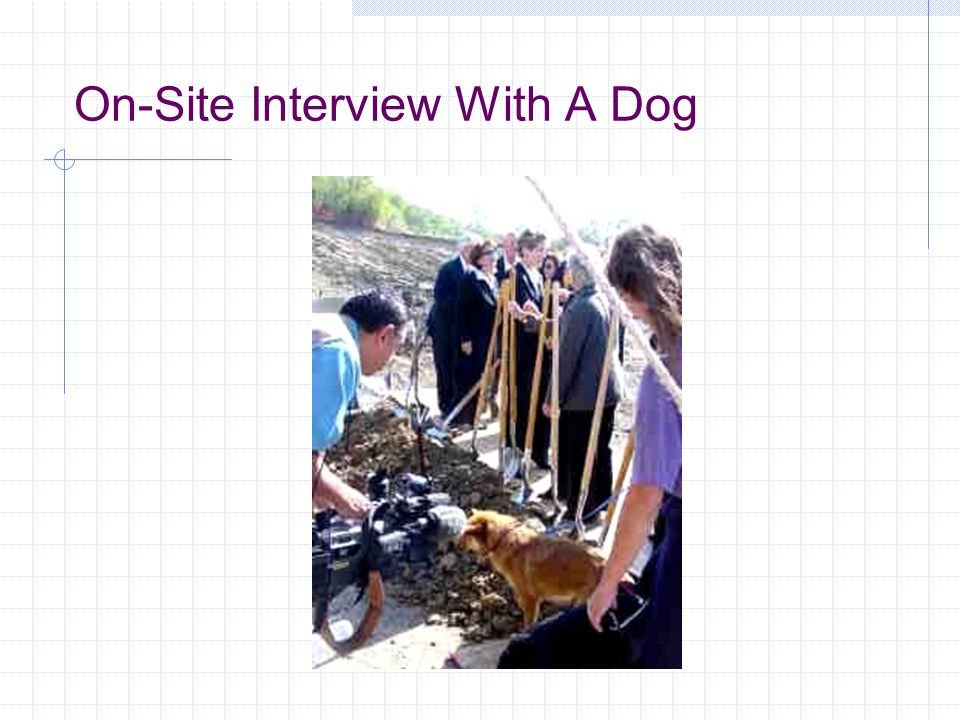 On-Site Interview With A Dog