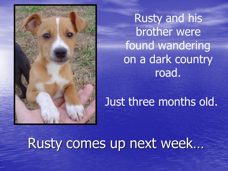 Rusty comes up next week… Rusty and his brother were found wandering on a dark country road.