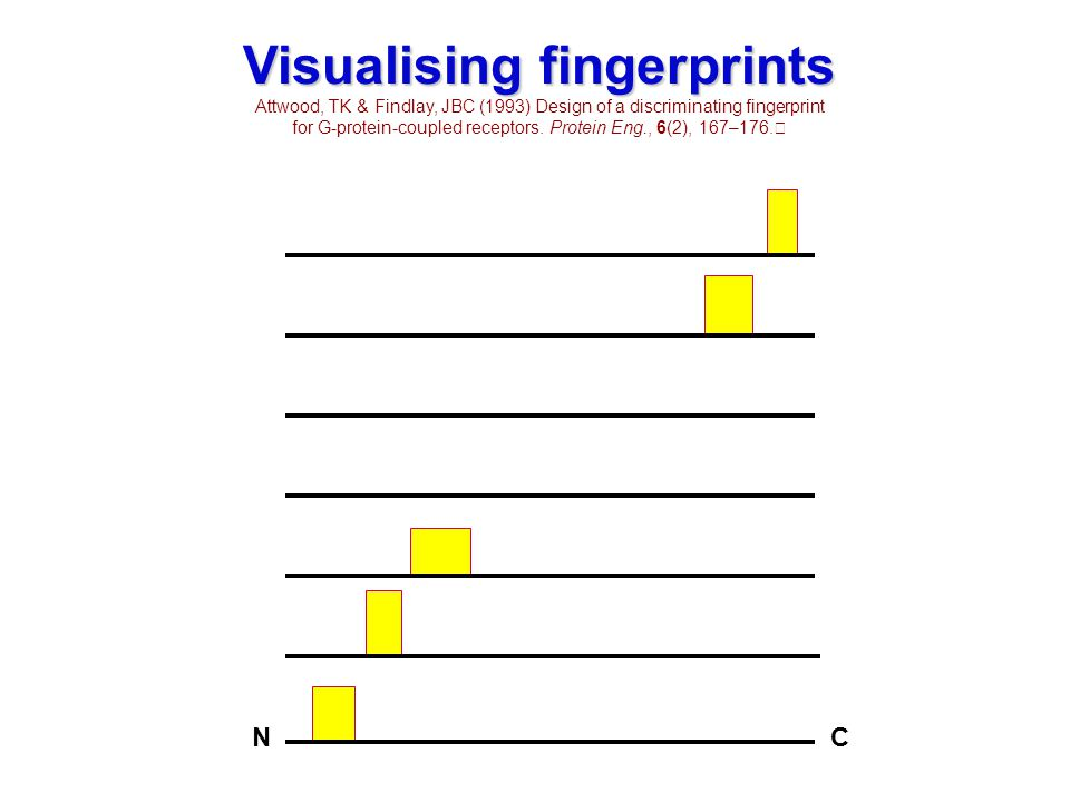 NC NC Visualising fingerprints Attwood, TK & Findlay, JBC (1993) Design of a discriminating fingerprint for G-protein-coupled receptors. Protein Eng.,