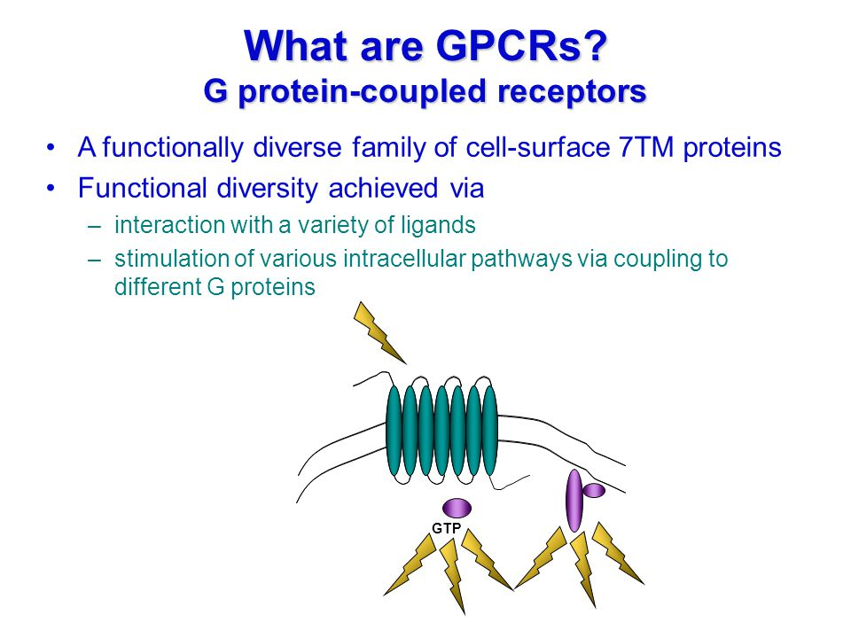 GDPGTP What are GPCRs? G protein-coupled receptors A functionally diverse family of cell-surface 7TM proteins Functional diversity achieved via –inter