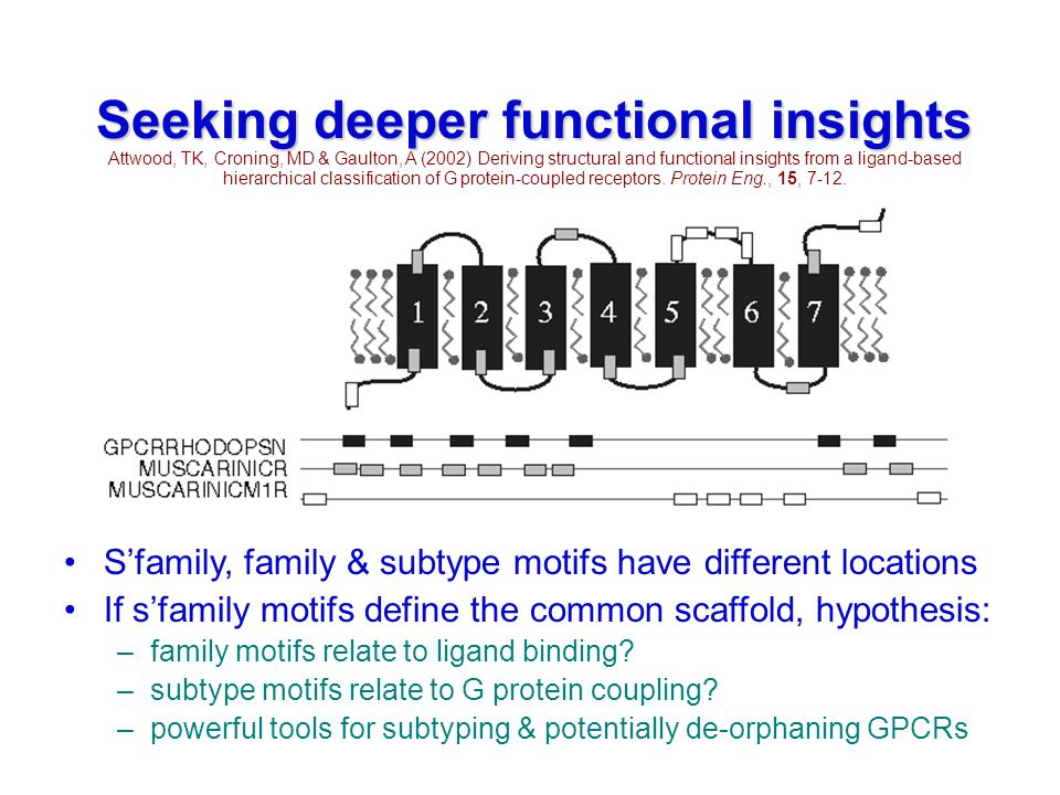Seeking deeper functional insights Attwood, TK, Croning, MD & Gaulton, A (2002) Deriving structural and functional insights from a ligand-based hierarchical classification of G protein-coupled receptors.