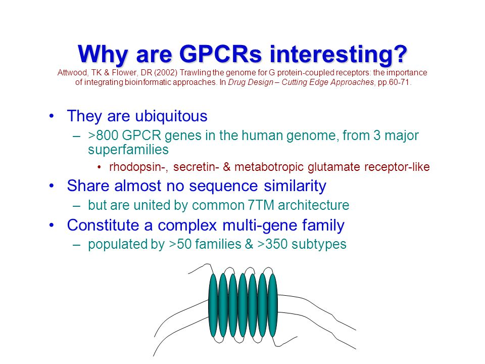 Why are GPCRs interesting? Why are GPCRs interesting? Attwood, TK & Flower, DR (2002) Trawling the genome for G protein-coupled receptors: the importa