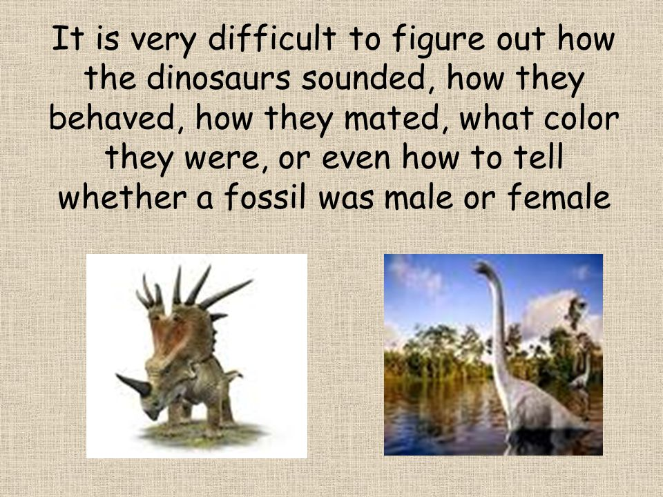 No one knows what colour or patterns the dinosaurs were