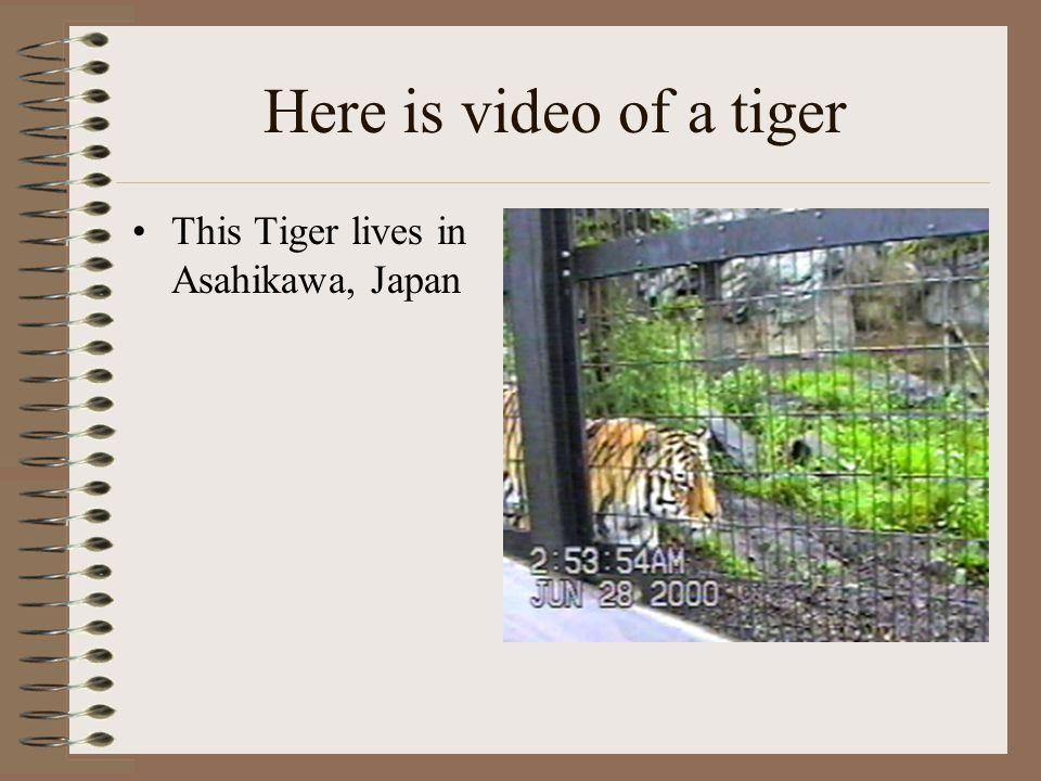 The tiger's shrinking habitat (From 1900-1990)