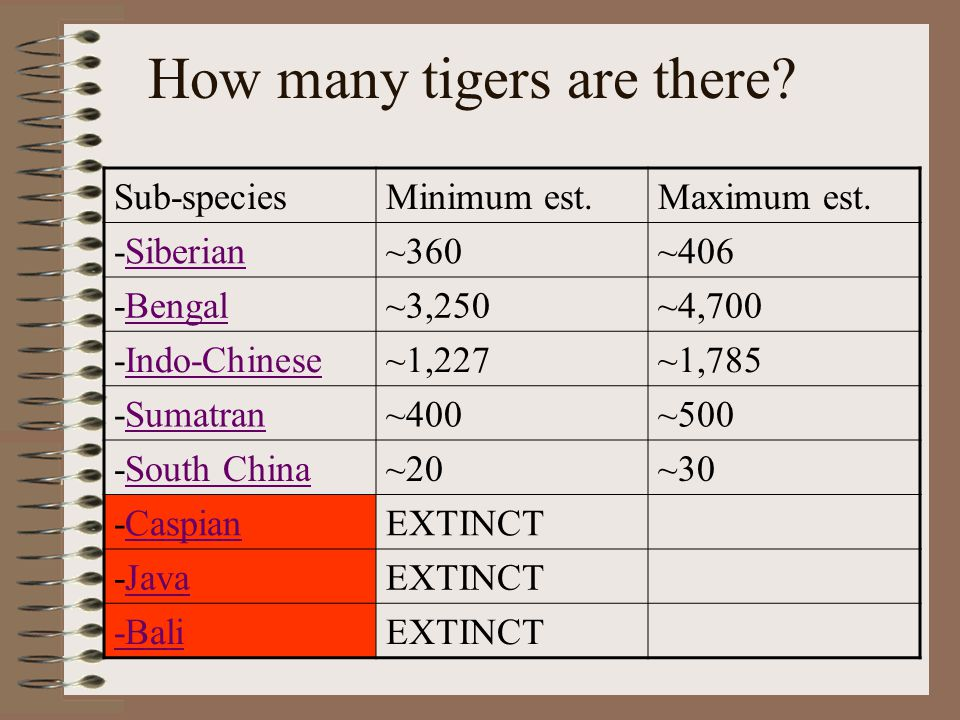 Here is video of a tiger This Tiger lives in Asahikawa, Japan
