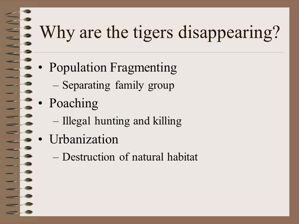 How many tigers are there.Sub-speciesMinimum est.Maximum est.