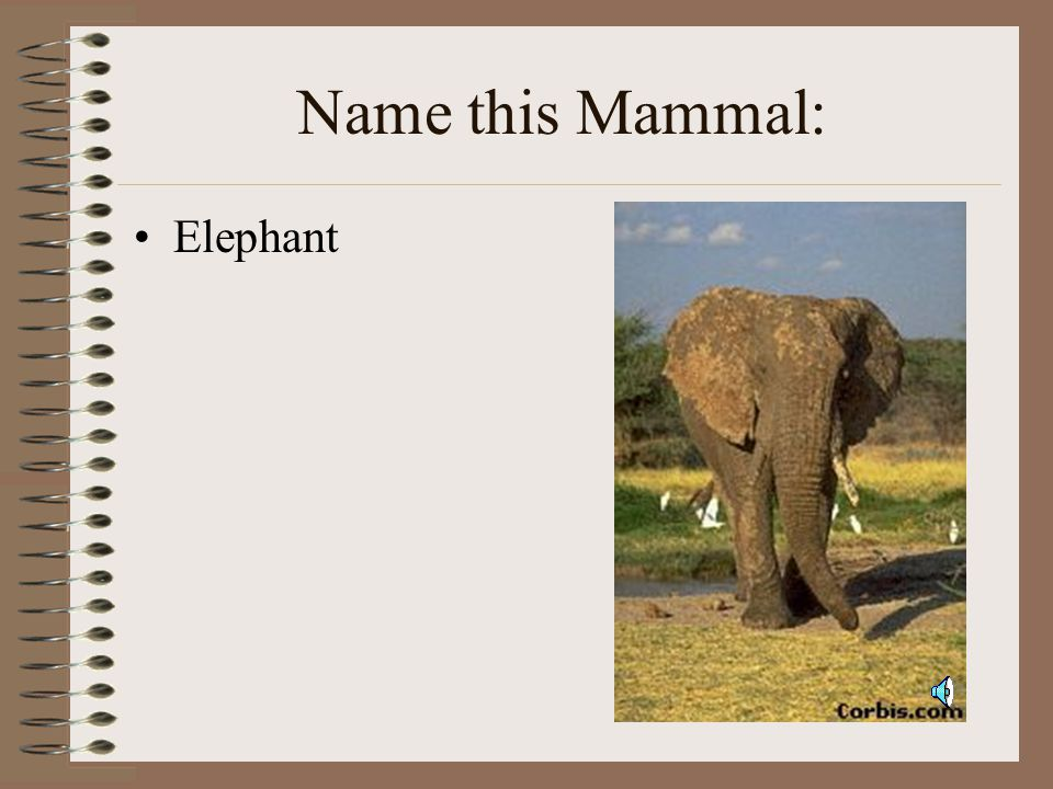 The Tiger is a Mammal.Let's take a look at other Mammals.