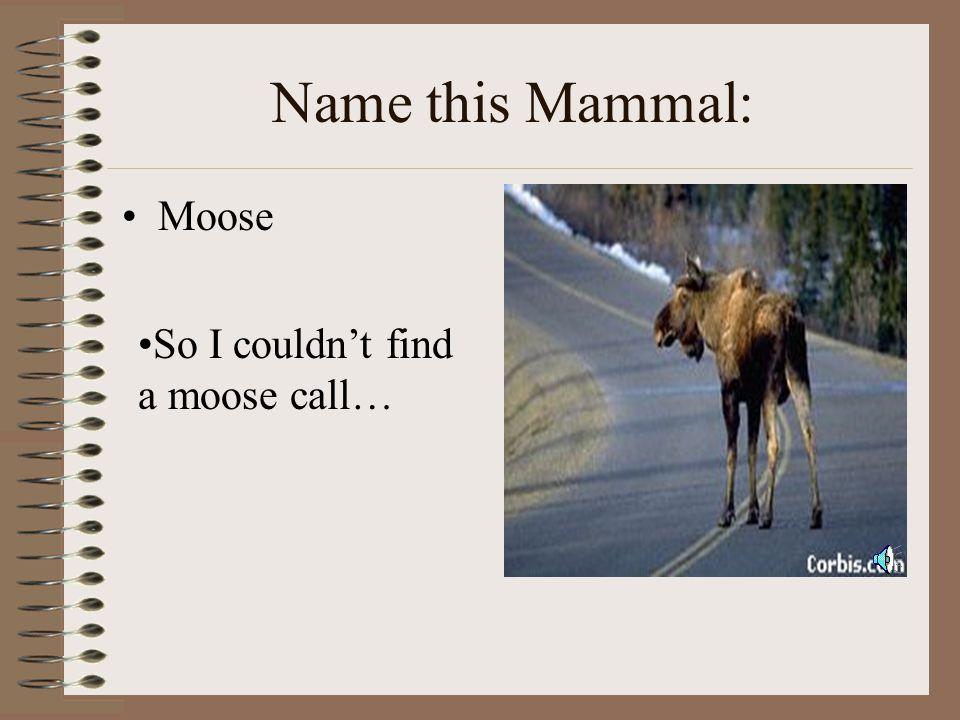 Name this Mammal: Elephant