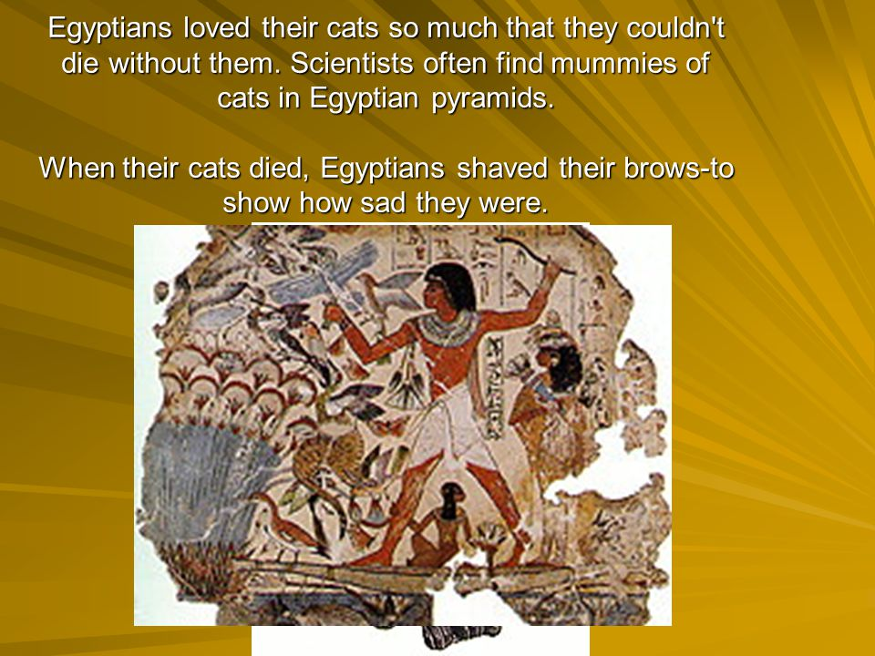 Egyptians loved their cats so much that they couldn't die without them. Scientists often find mummies of cats in Egyptian pyramids. When their cats di