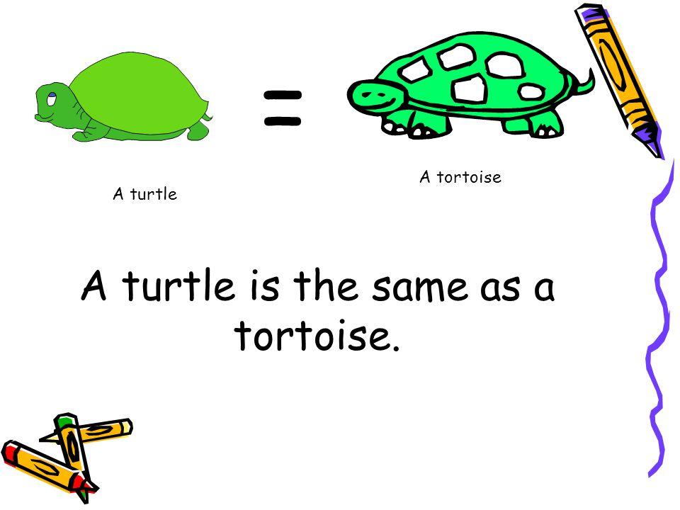 A turtle A tortoise =