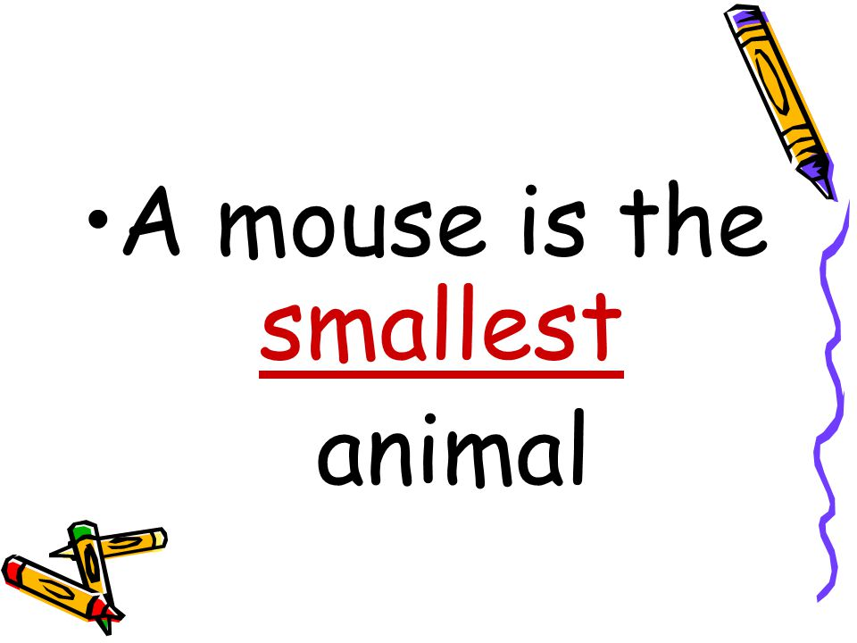 A mouse is the ……………………… animal