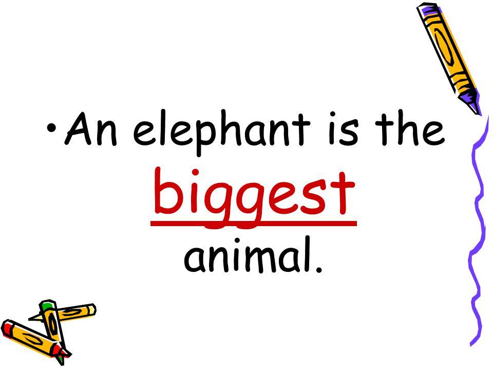 An elephant is the ……………………….. animal.