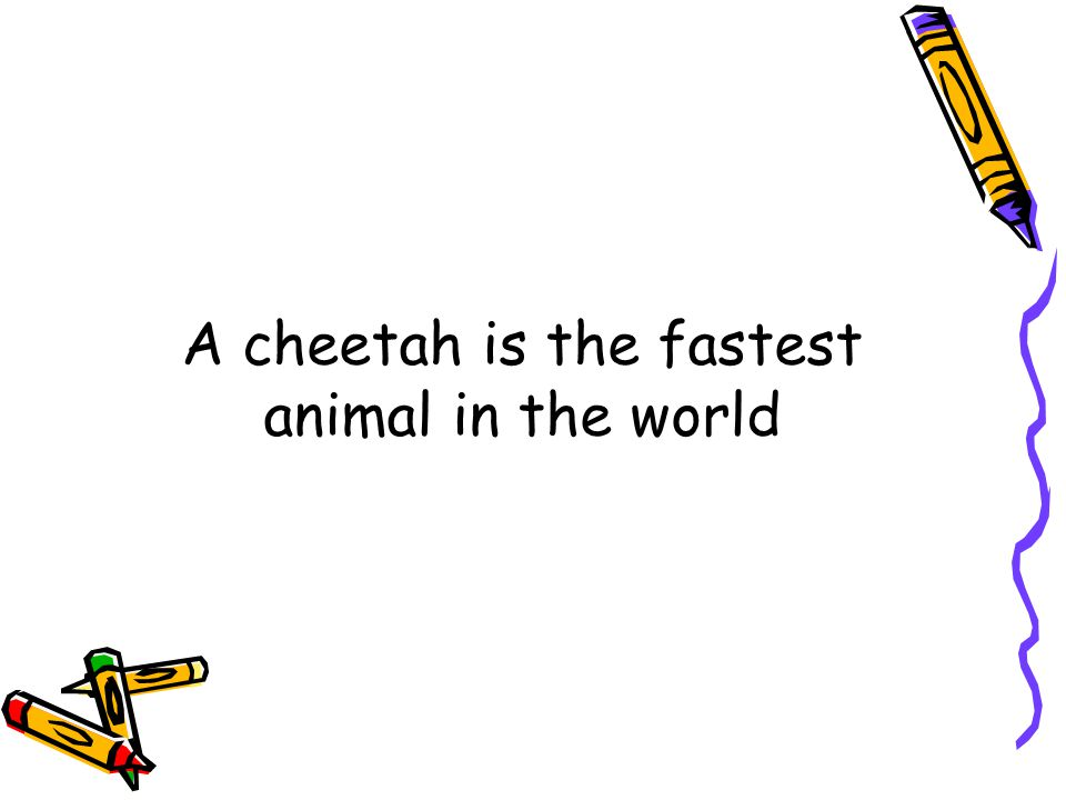 Which is the fastest animal in the world