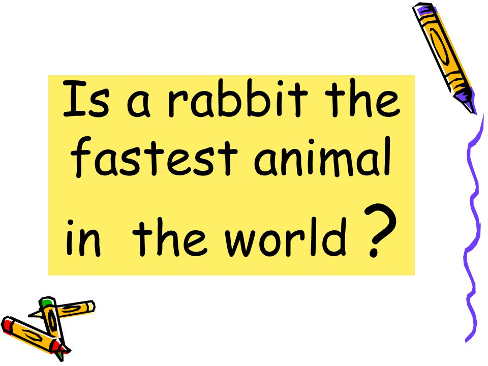 A cheetah is the fastest animal in the world