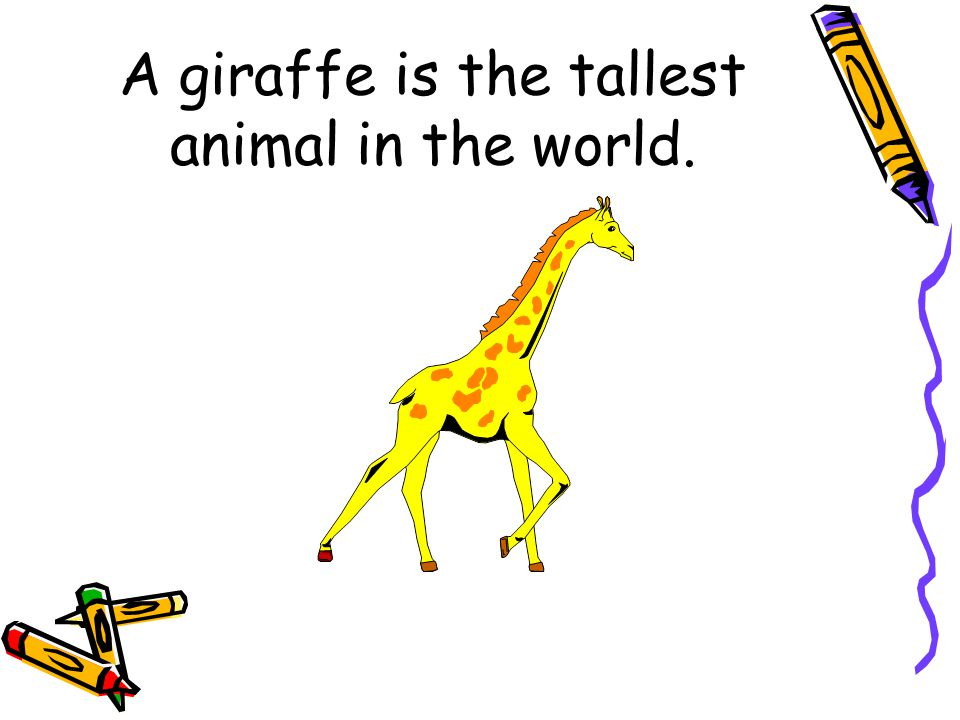 A giraffe is the …………….animal in the world.