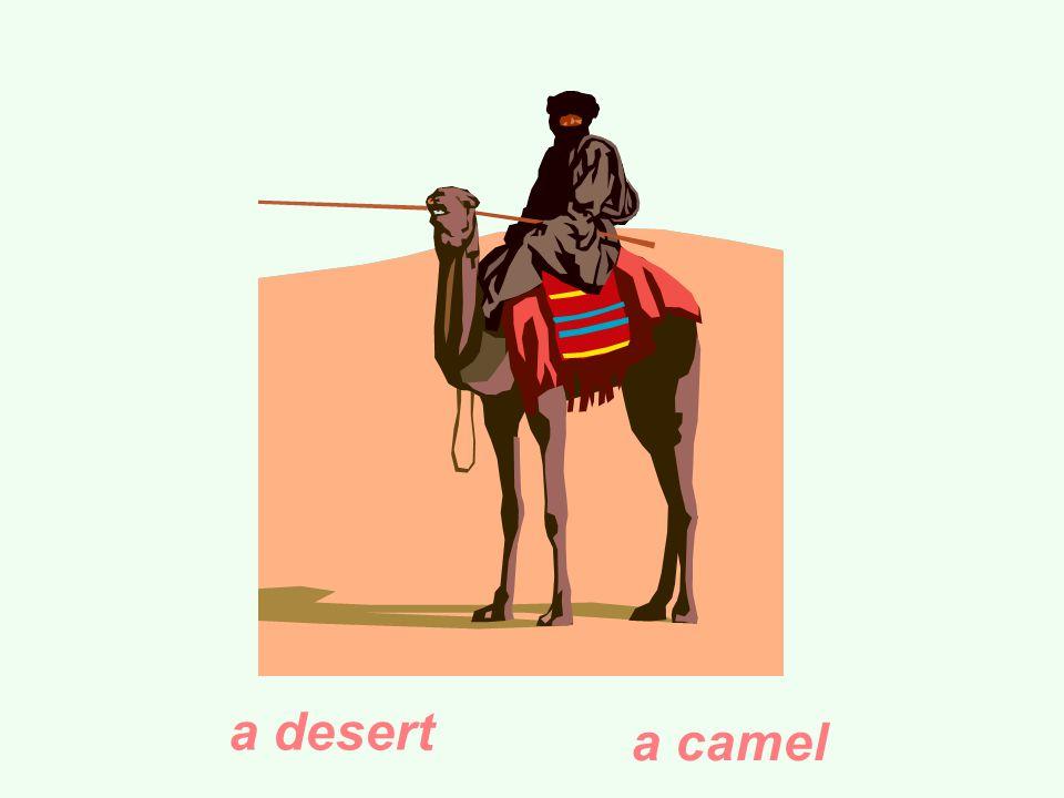 a desert a camel