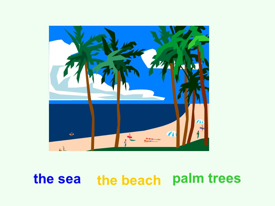 the sea the beach palm trees
