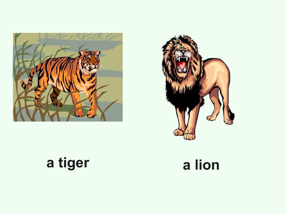 a tiger a lion