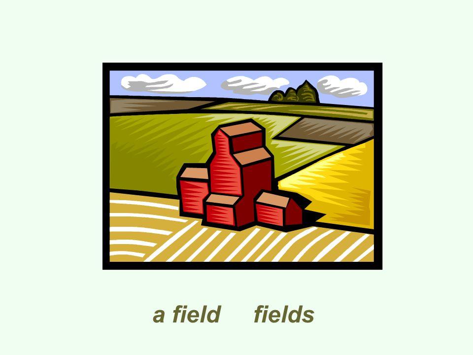 a field fields