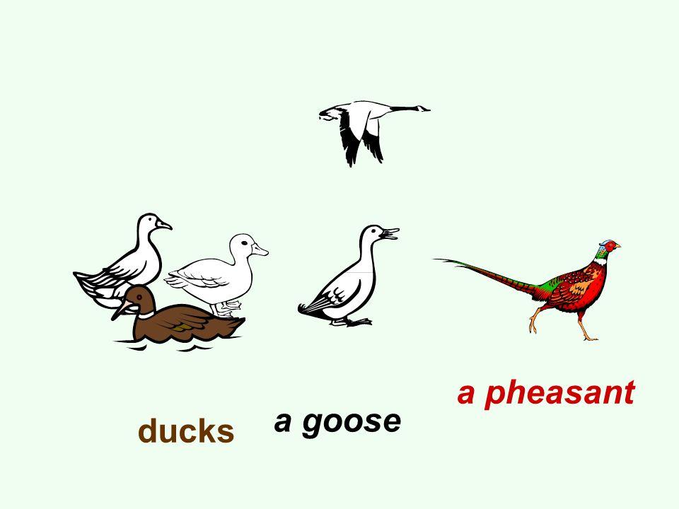 ducks a goose a pheasant
