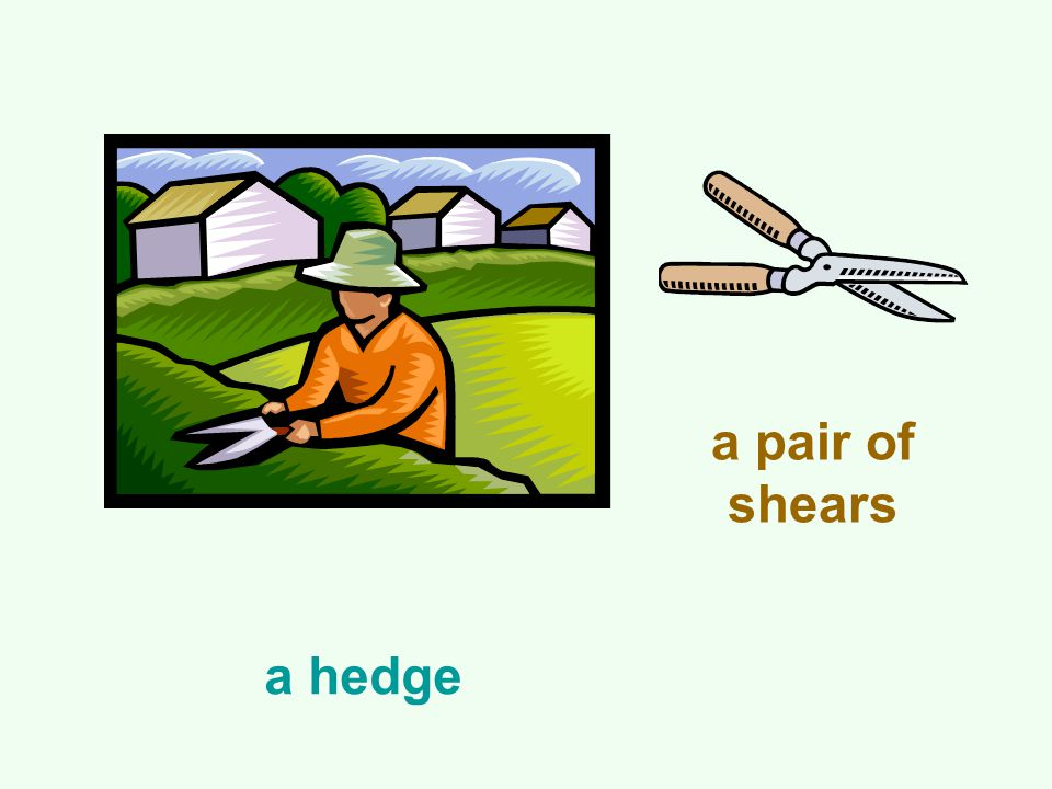 a hedge a pair of shears