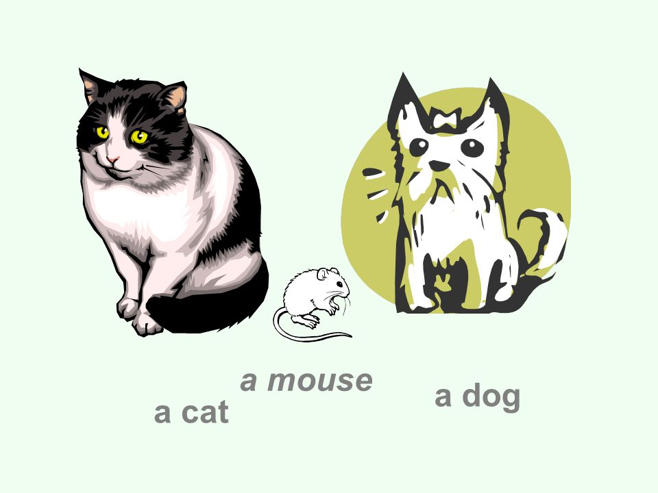 a cat a dog a mouse