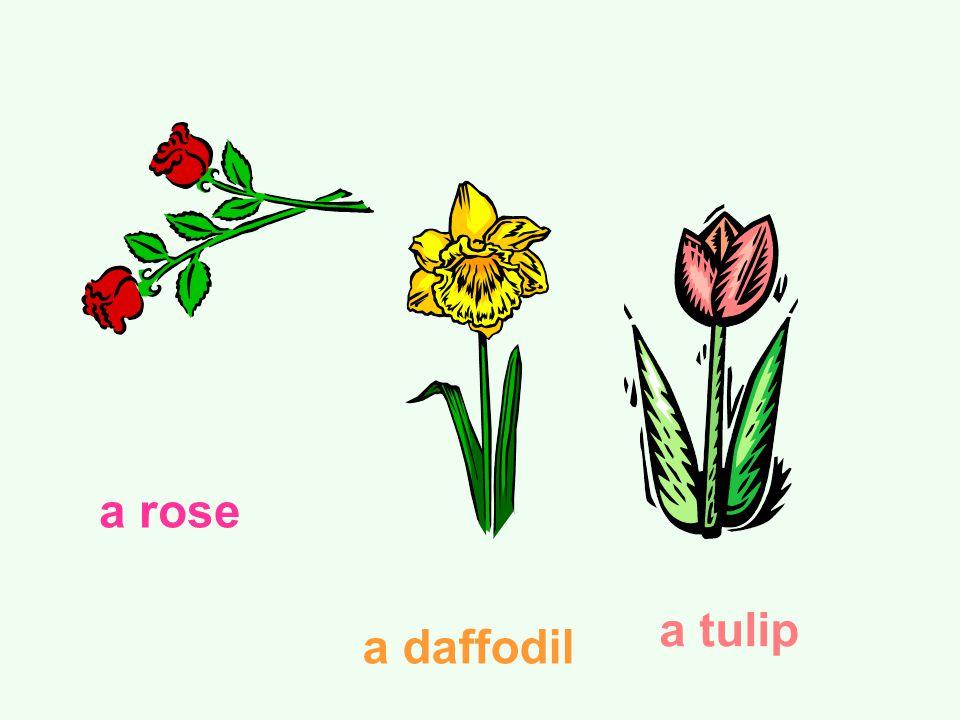 a rose a daffodil a tulip