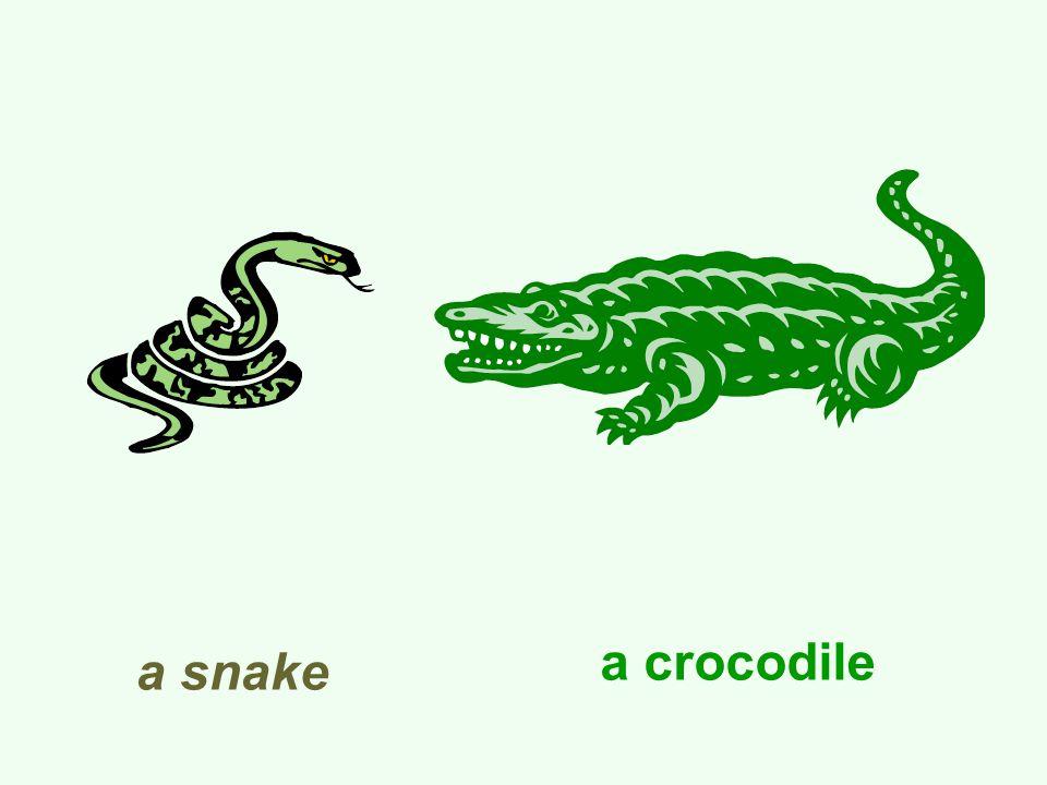 a snake a crocodile