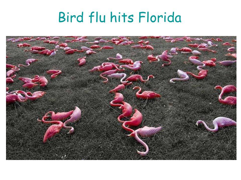 Bird flu hits Florida