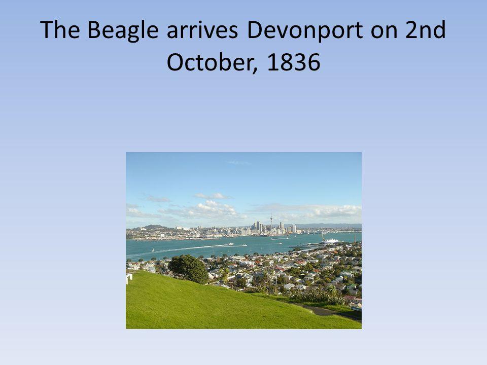 The Beagle arrives Devonport on 2nd October, 1836