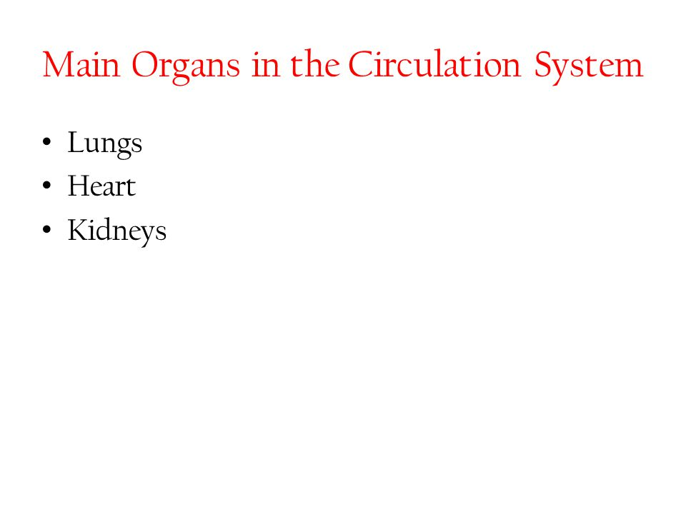 Main Organs in the Circulation System Lungs Heart Kidneys