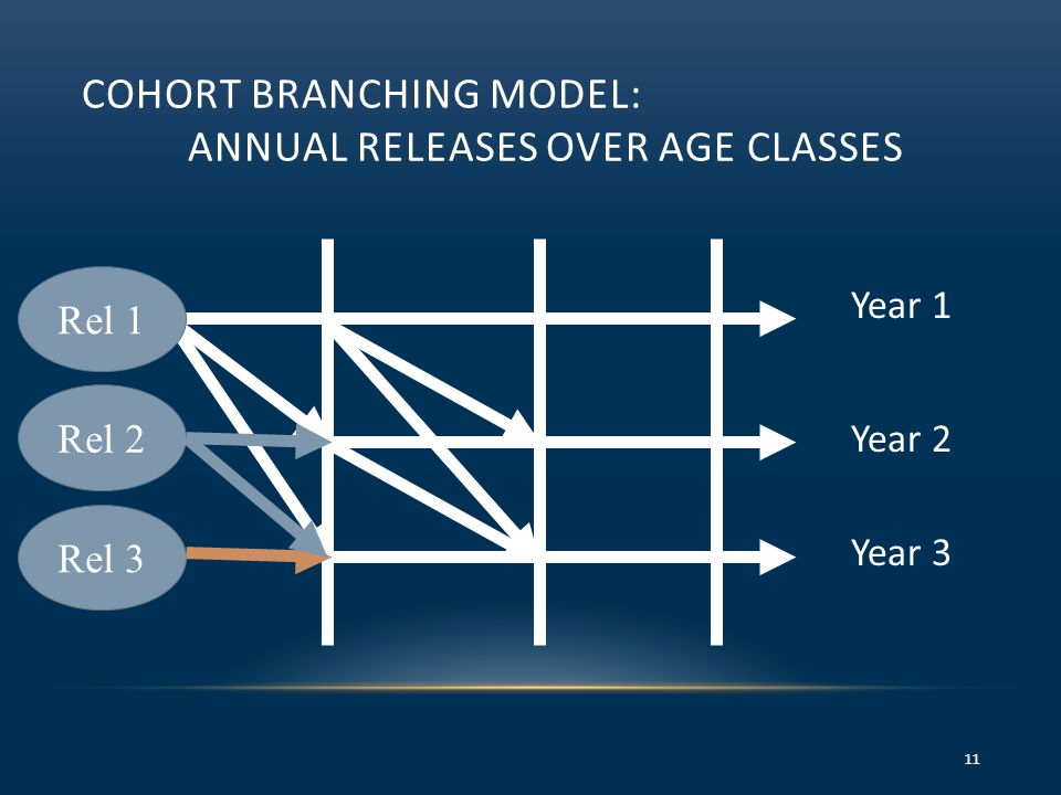 COHORT BRANCHING MODEL: ANNUAL RELEASES OVER AGE CLASSES 11 Year 1 Year 2 Year 3 Rel 2 Rel 3 Rel 1