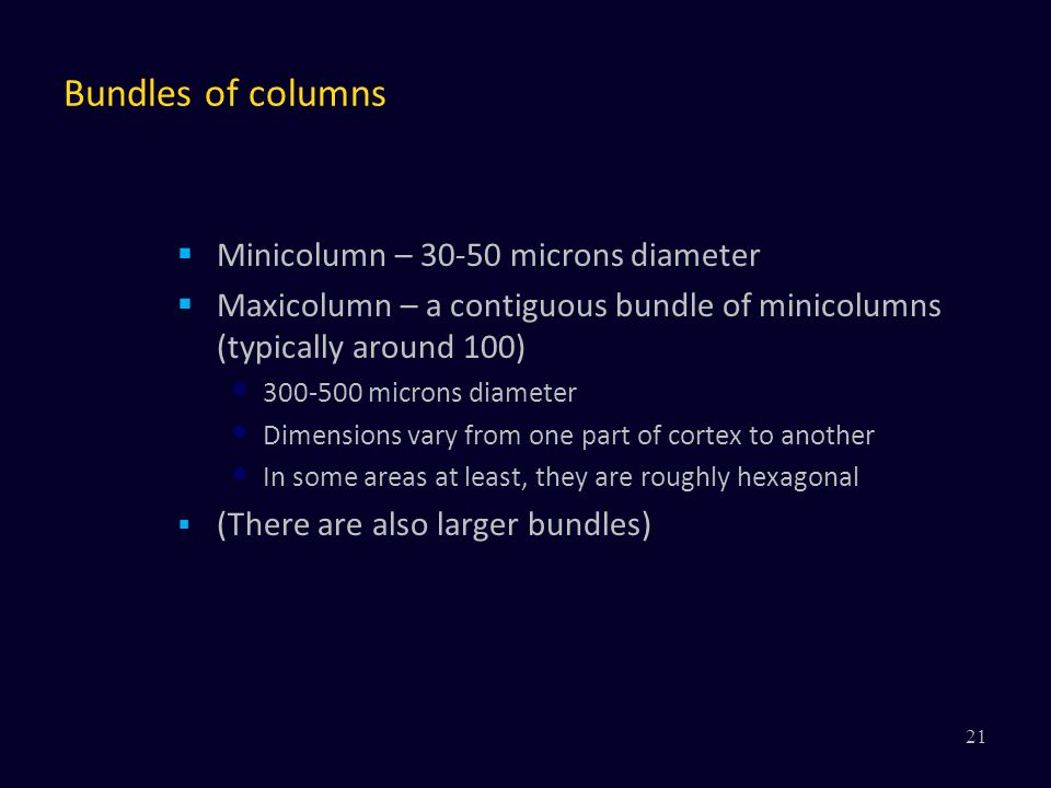 Bundles of columns  Minicolumn – 30-50 microns diameter  Maxicolumn – a contiguous bundle of minicolumns (typically around 100) 300-500 microns diam