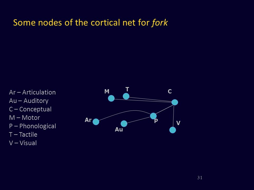Some nodes of the cortical net for fork V MC T P Au Ar 31 Ar – Articulation Au – Auditory C – Conceptual M – Motor P – Phonological T – Tactile V – Vi