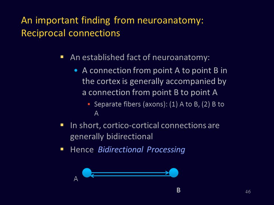 An important finding from neuroanatomy: Reciprocal connections  An established fact of neuroanatomy: A connection from point A to point B in the cort
