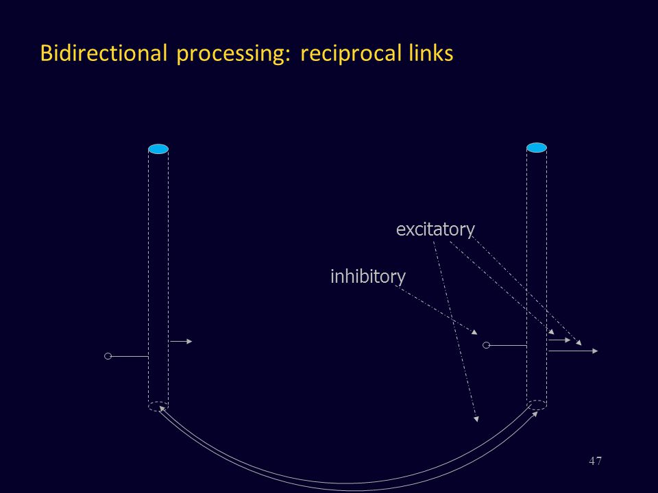 Bidirectional processing: reciprocal links excitatory inhibitory 47