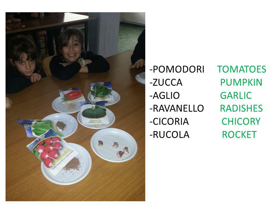 -POMODORI TOMATOES -ZUCCA PUMPKIN -AGLIO GARLIC -RAVANELLO RADISHES -CICORIA CHICORY -RUCOLA ROCKET