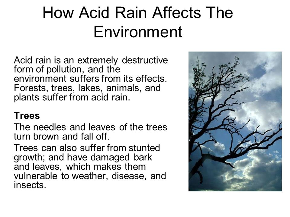 How Acid Rain Affects The Environment Acid rain is an extremely destructive form of pollution, and the environment suffers from its effects.