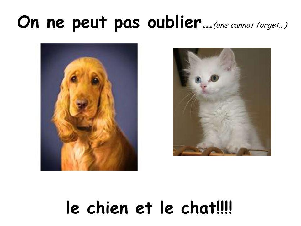 le chien et le chat!!!! On ne peut pas oublier… (one cannot forget…)