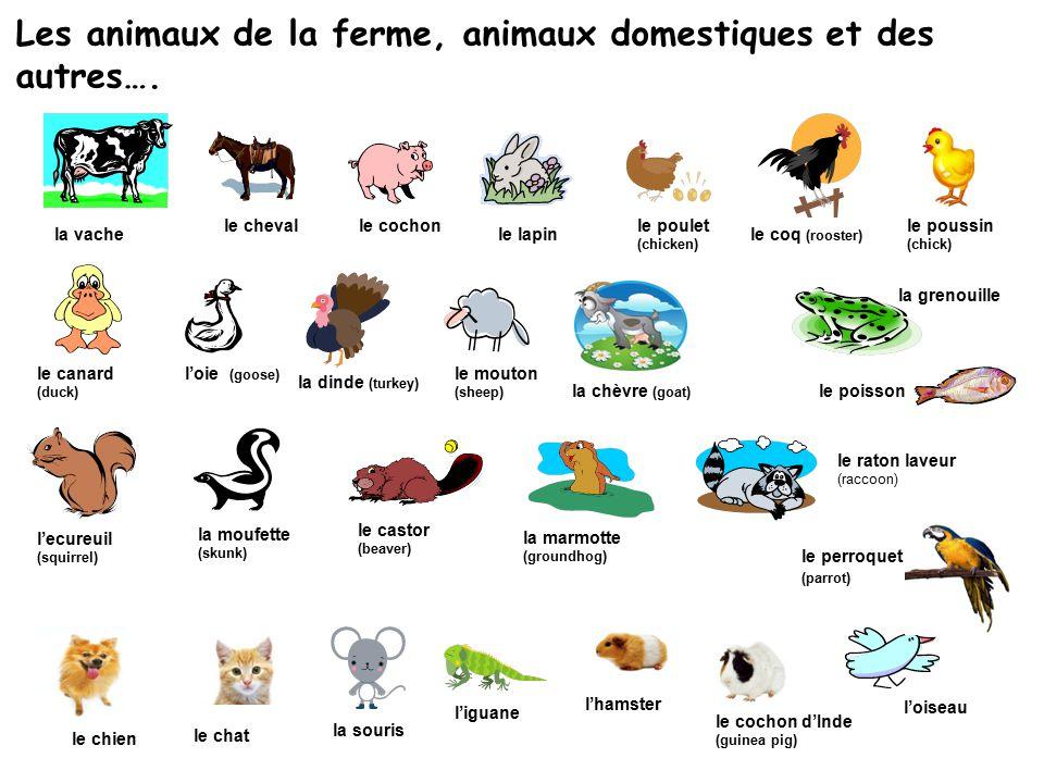 Les animaux de la ferme, animaux domestiques et des autres….