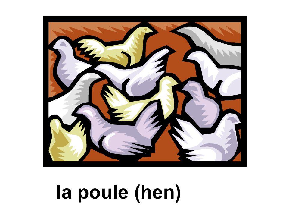 la poule (hen)