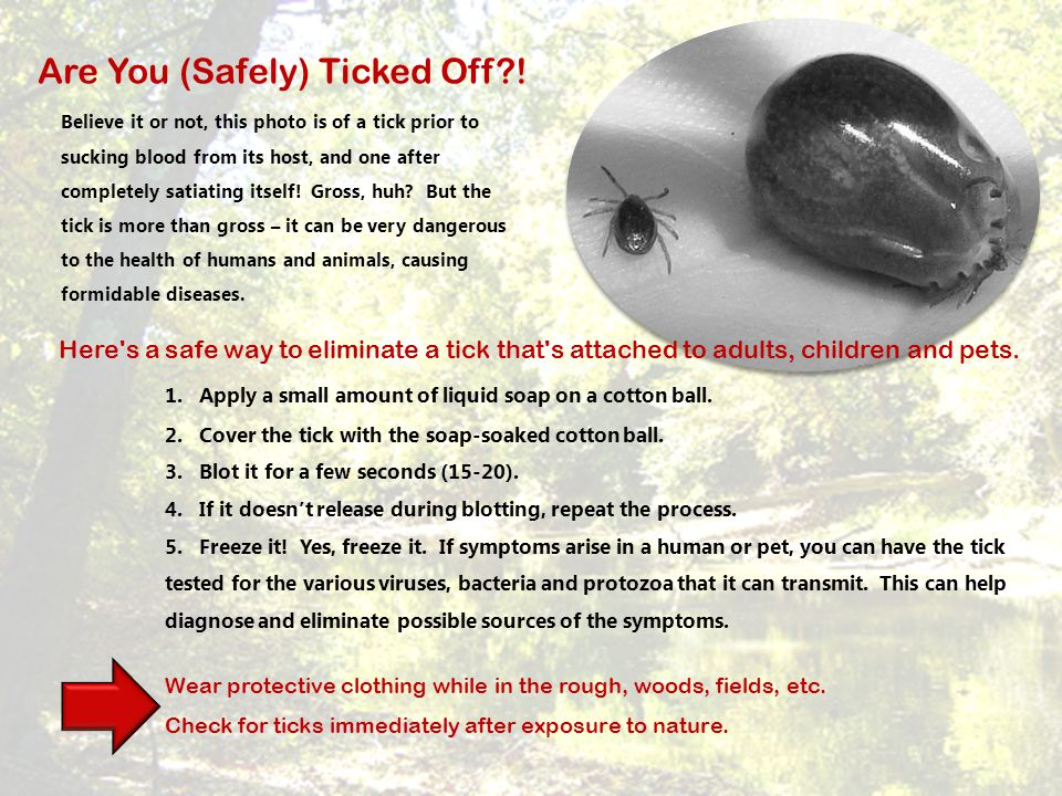 Here's a safe way to eliminate a tick that's attached to adults, children and pets. 1. Apply a small amount of liquid soap on a cotton ball. 2. Cover