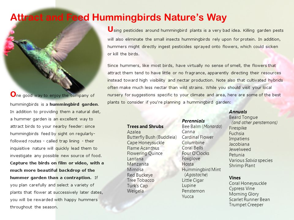 U sing pesticides around hummingbird plants is a very bad idea.