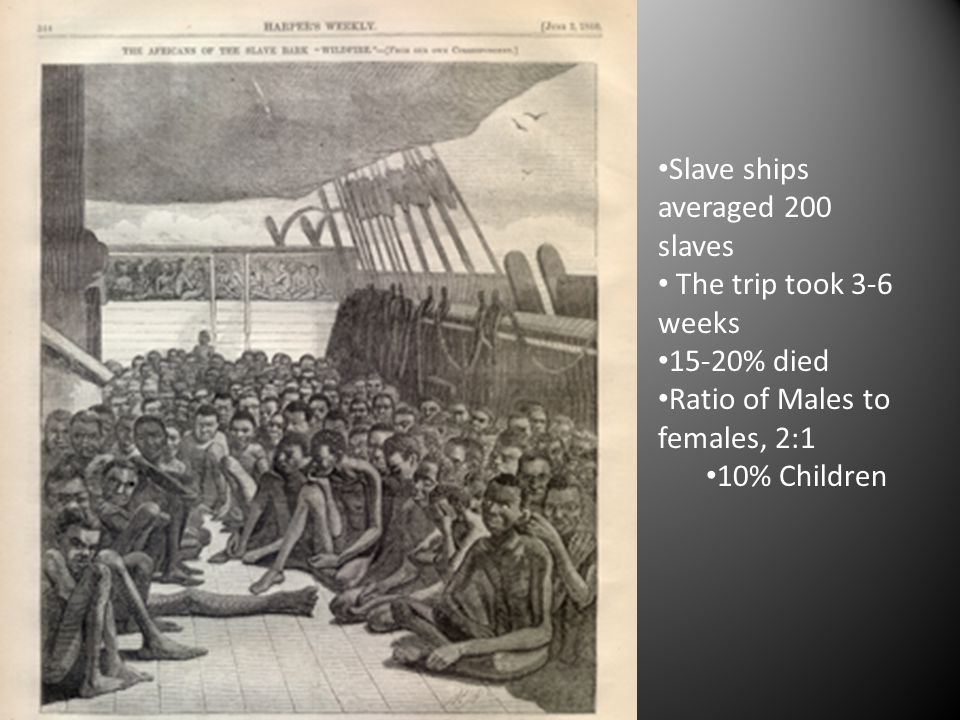 Slave ships averaged 200 slaves The trip took 3-6 weeks 15-20% died Ratio of Males to females, 2:1 10% Children