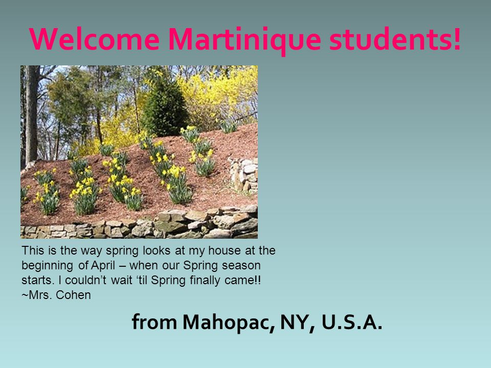 from Mahopac, NY, U.S.A. Welcome Martinique students! This is the way spring looks at my house at the beginning of April – when our Spring season star