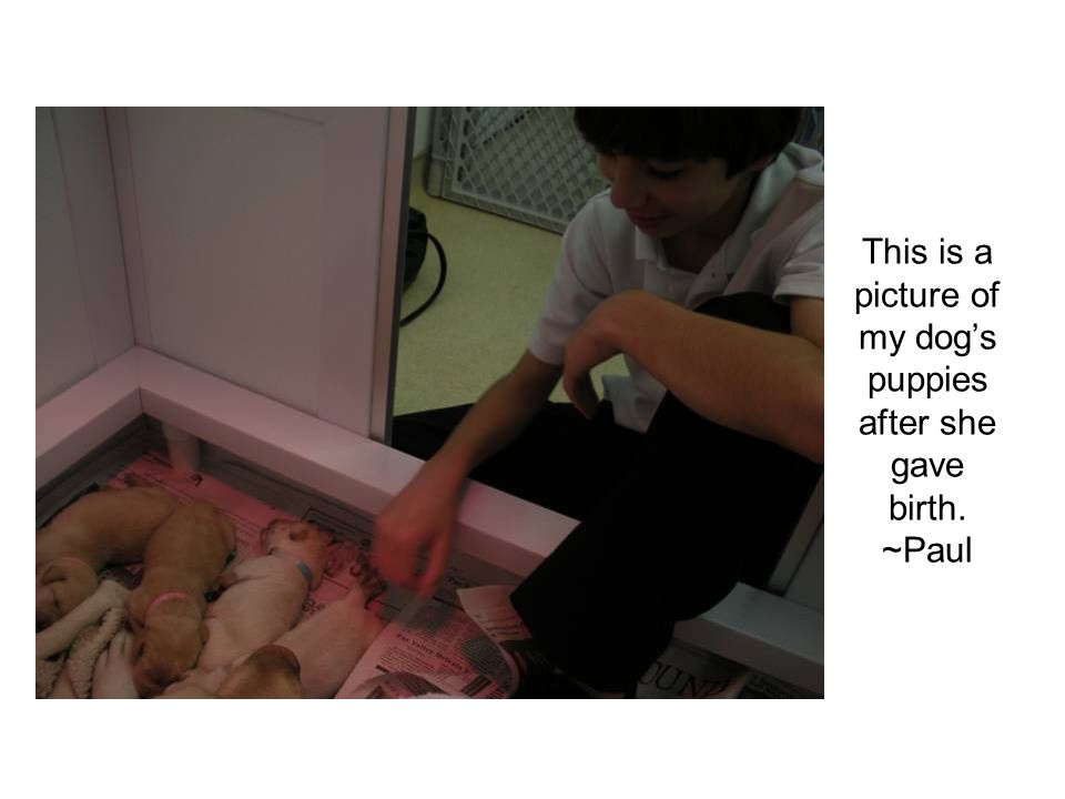 This is a picture of my dog's puppies after she gave birth. ~Paul