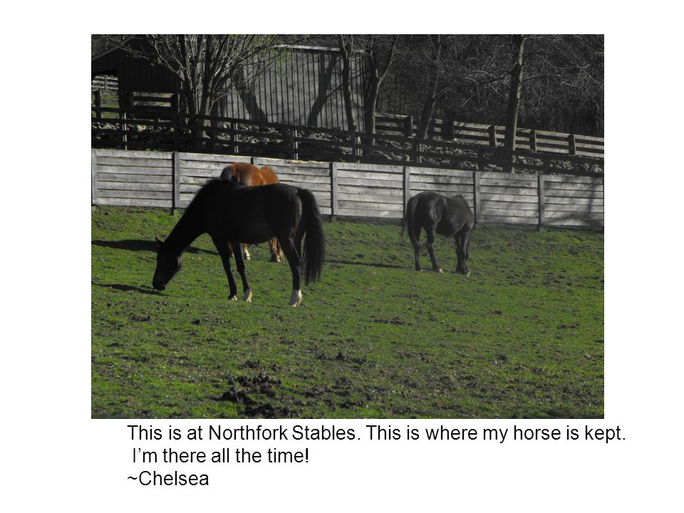 This is at Northfork Stables. This is where my horse is kept. I'm there all the time! ~Chelsea