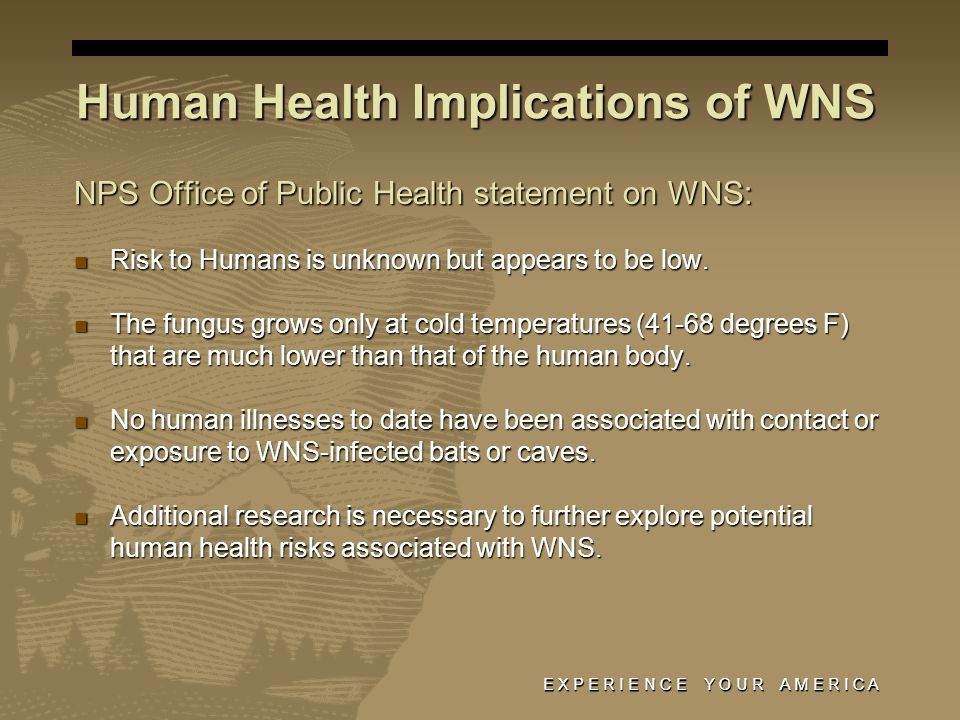E X P E R I E N C E Y O U R A M E R I C A Human Health Implications of WNS NPS Office of Public Health statement on WNS: Risk to Humans is unknown but appears to be low.