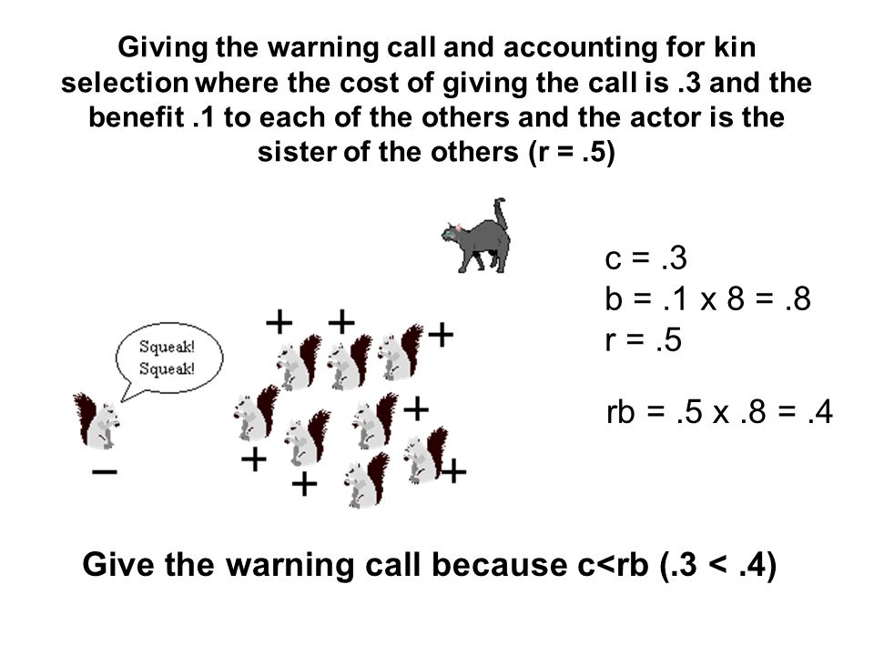 Giving the warning call and accounting for kin selection where the cost of giving the call is.3 and the benefit.1 to each of the others and the actor is the sister of the others (r =.5) c =.3 b =.1 x 8 =.8 r =.5 rb =.5 x.8 =.4 Give the warning call because c<rb (.3 <.4)